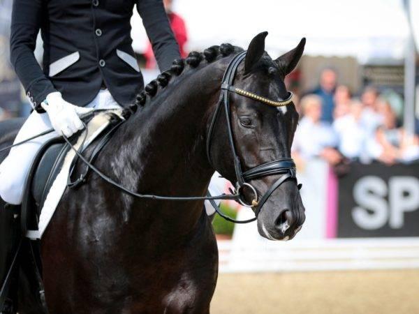 Sport Horses for Sale | Quality Horses | Peter Berkers