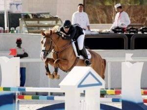Show Jumping Horses for Sale Qatar Kuwait UAE Saudi Arabia