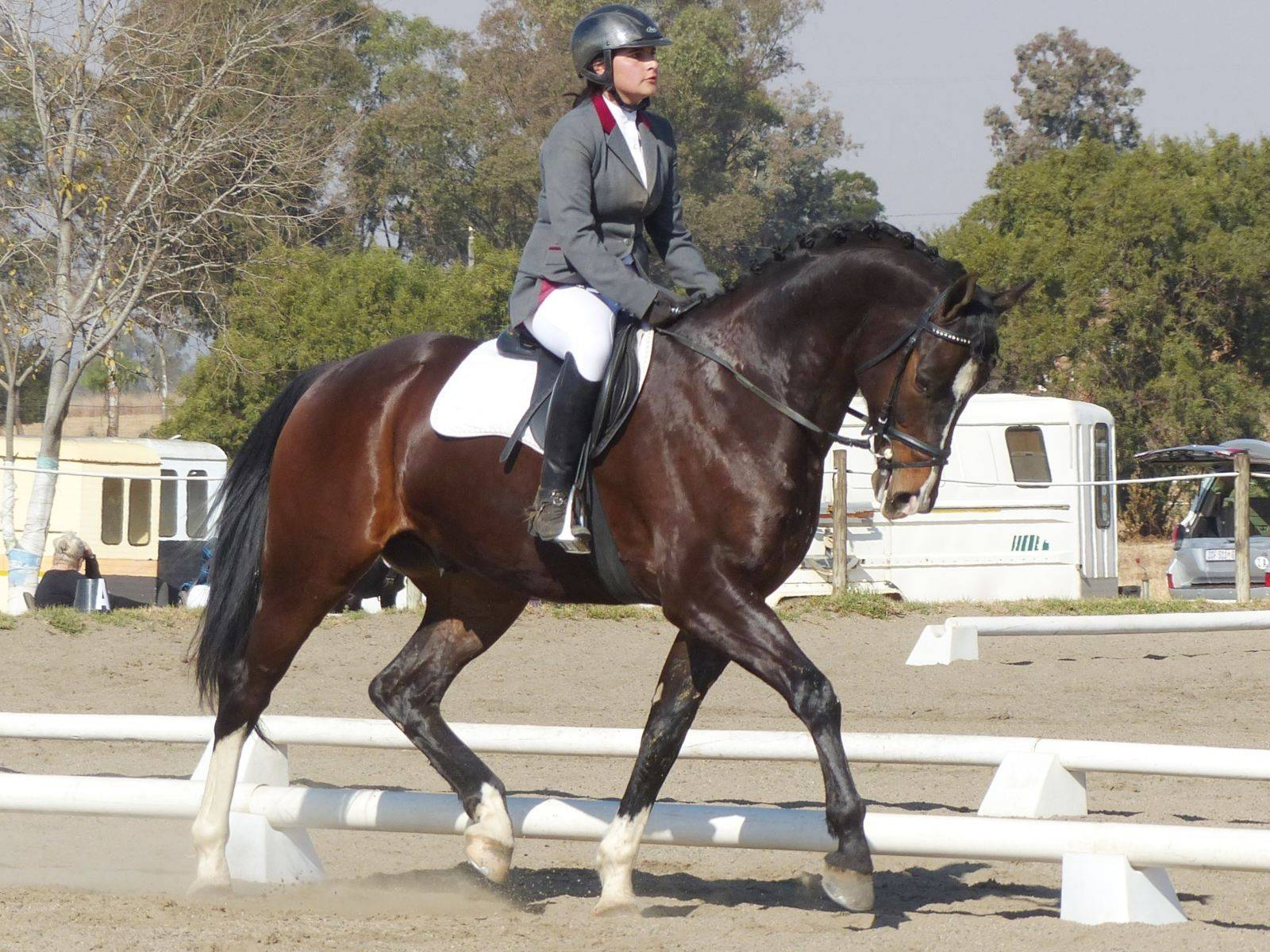 Dressage Horses for Sale South Africa