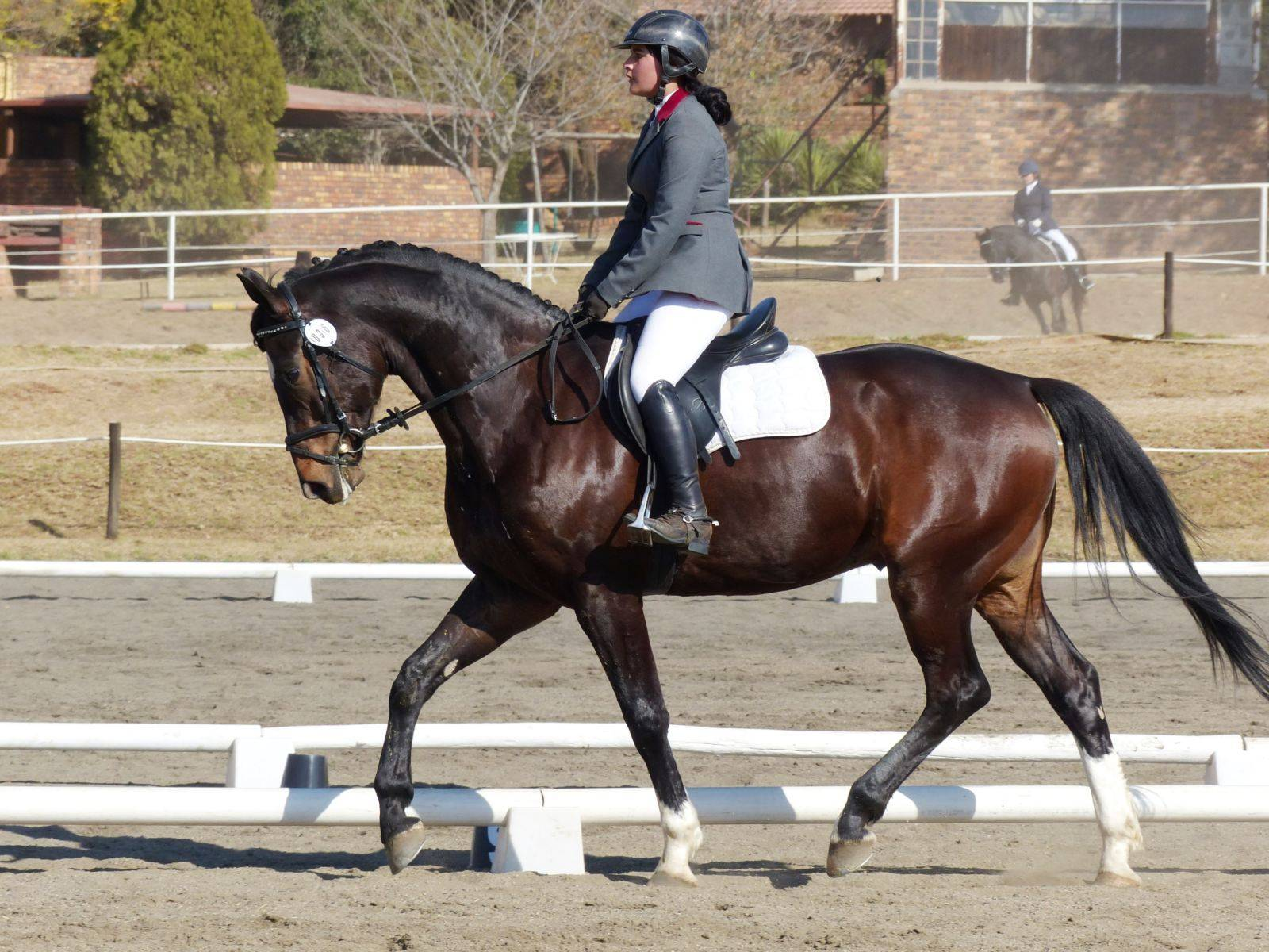 Dressage Horse for Sale South Africa