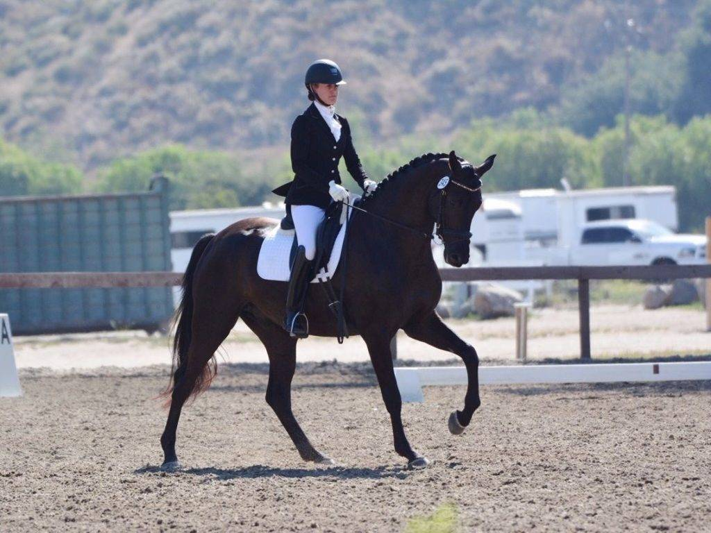 Emily Lasher Dressage Horses for Sale California USA