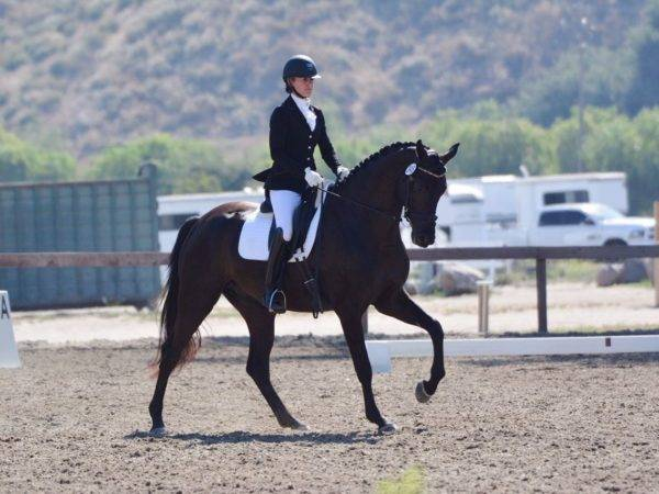 Dressage Horses for Sale California Emily Lasher