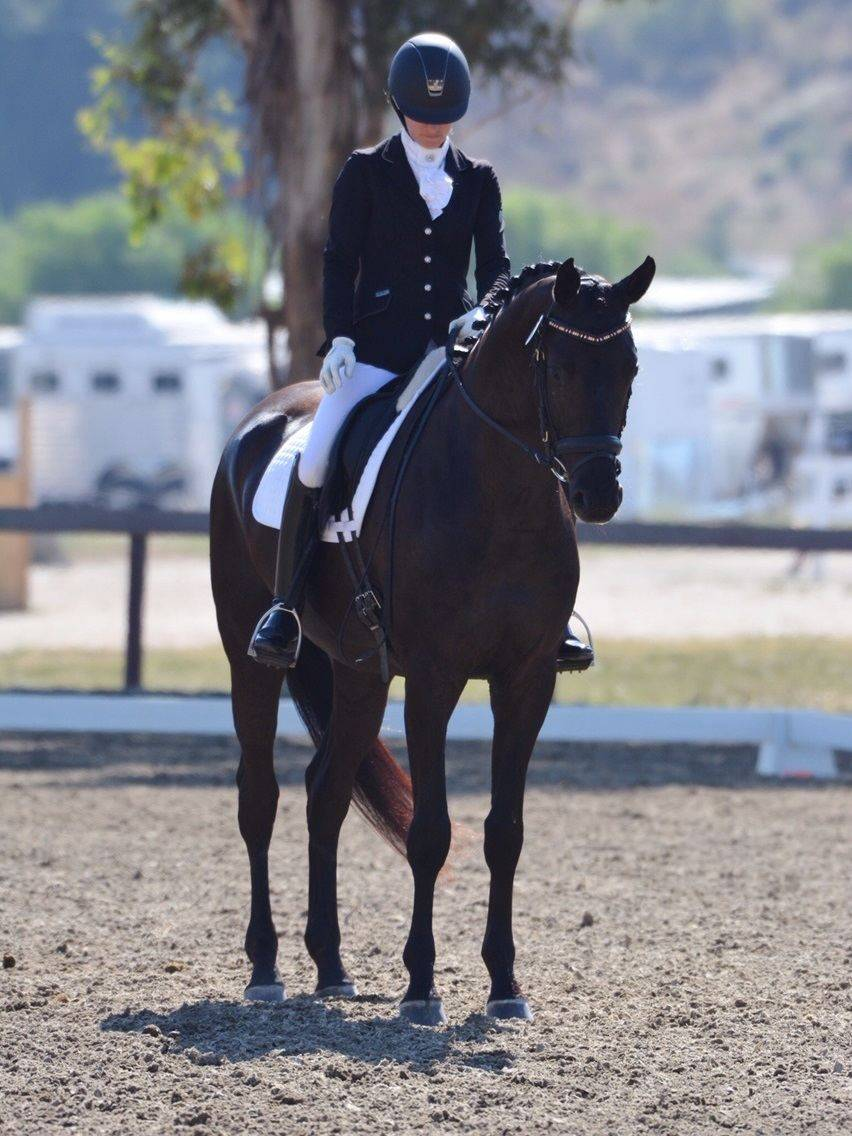 Dressage Horses for Sale California