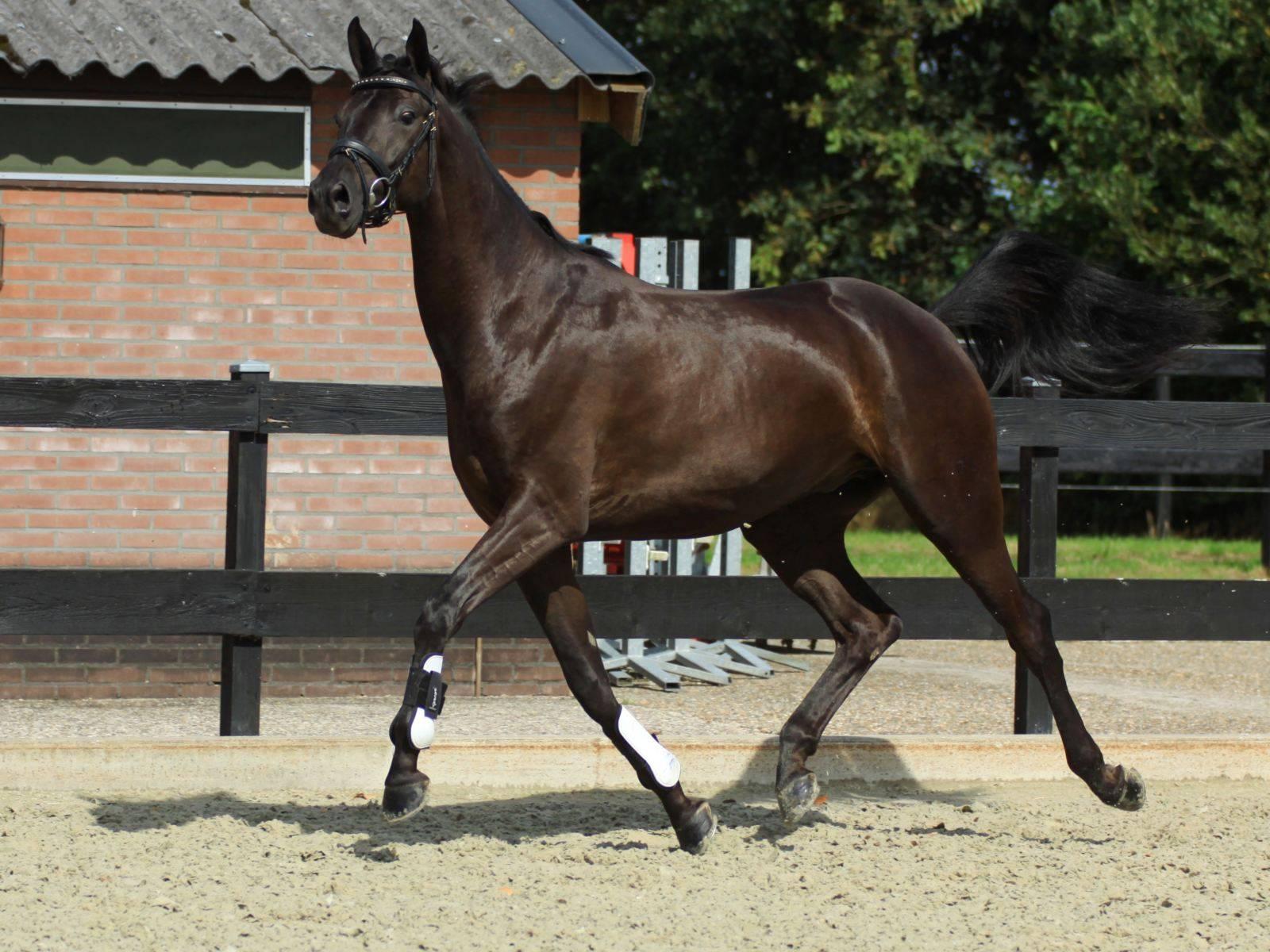 Horses for Sale California