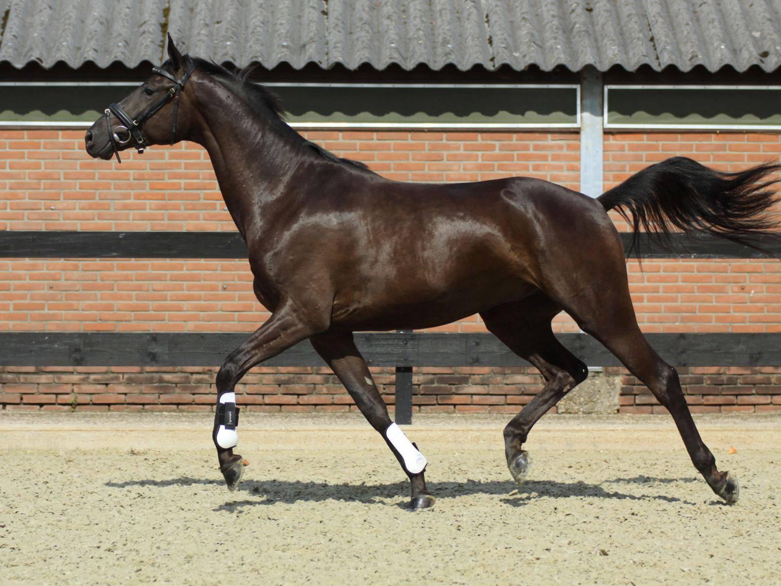 Horse for Sale California