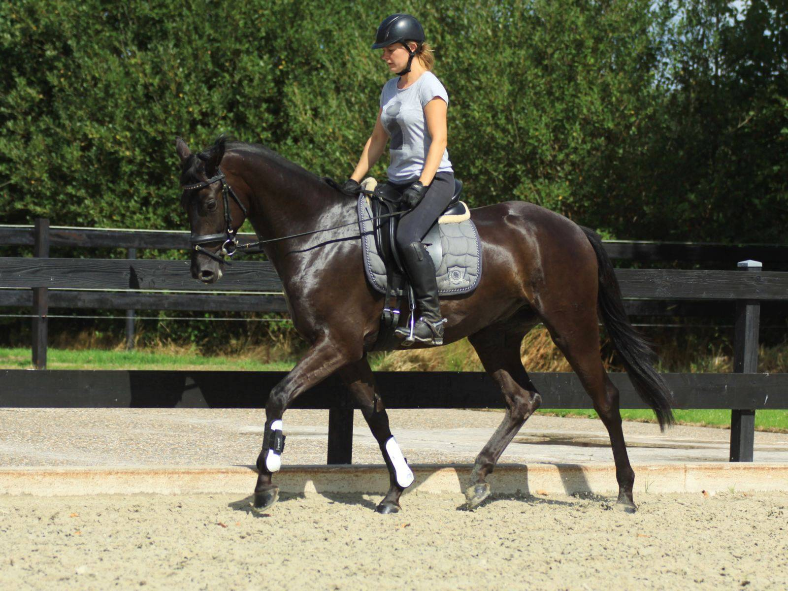 Dressage Horse for Sale California