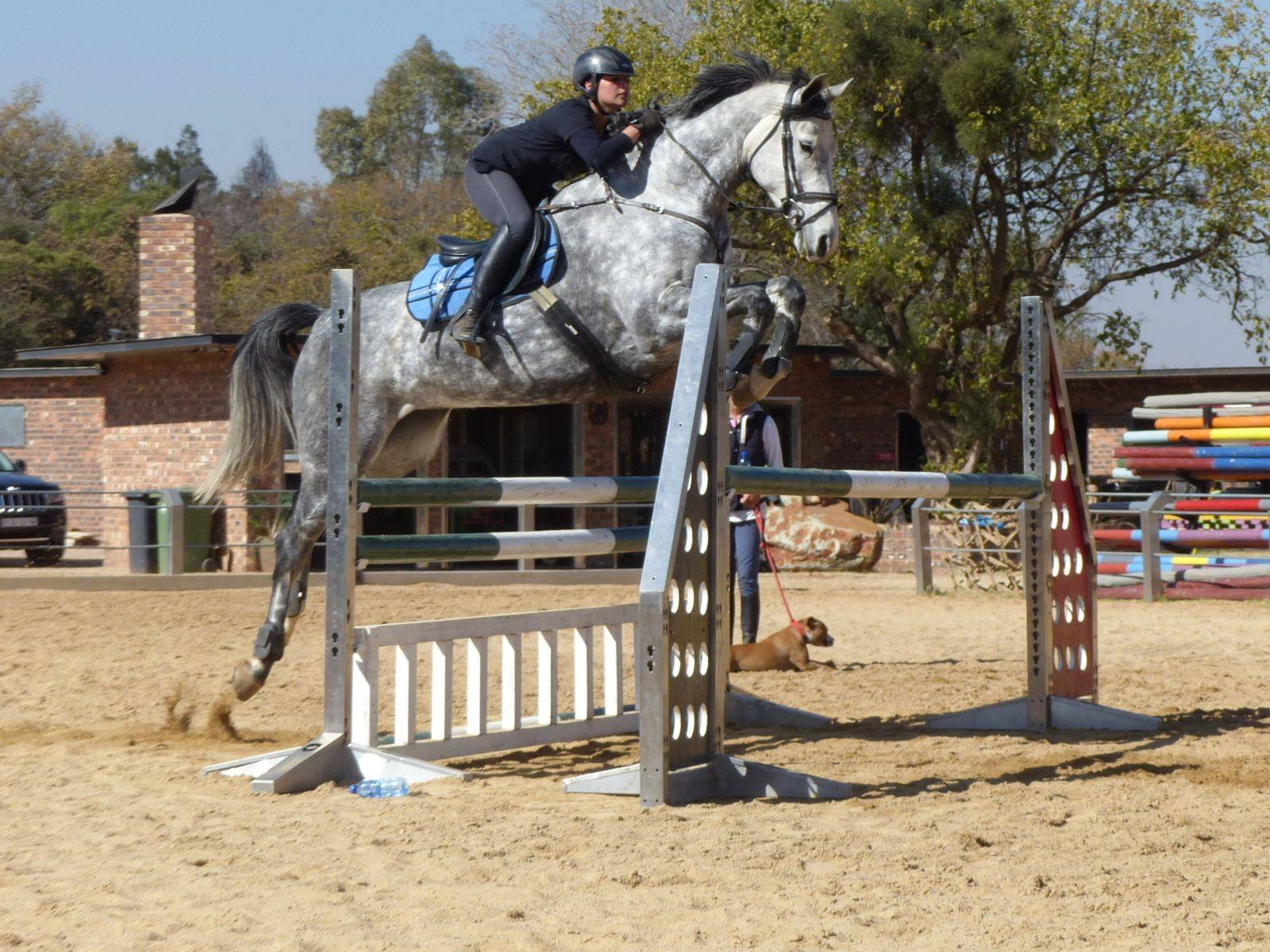 Horse Jumping in South Africa