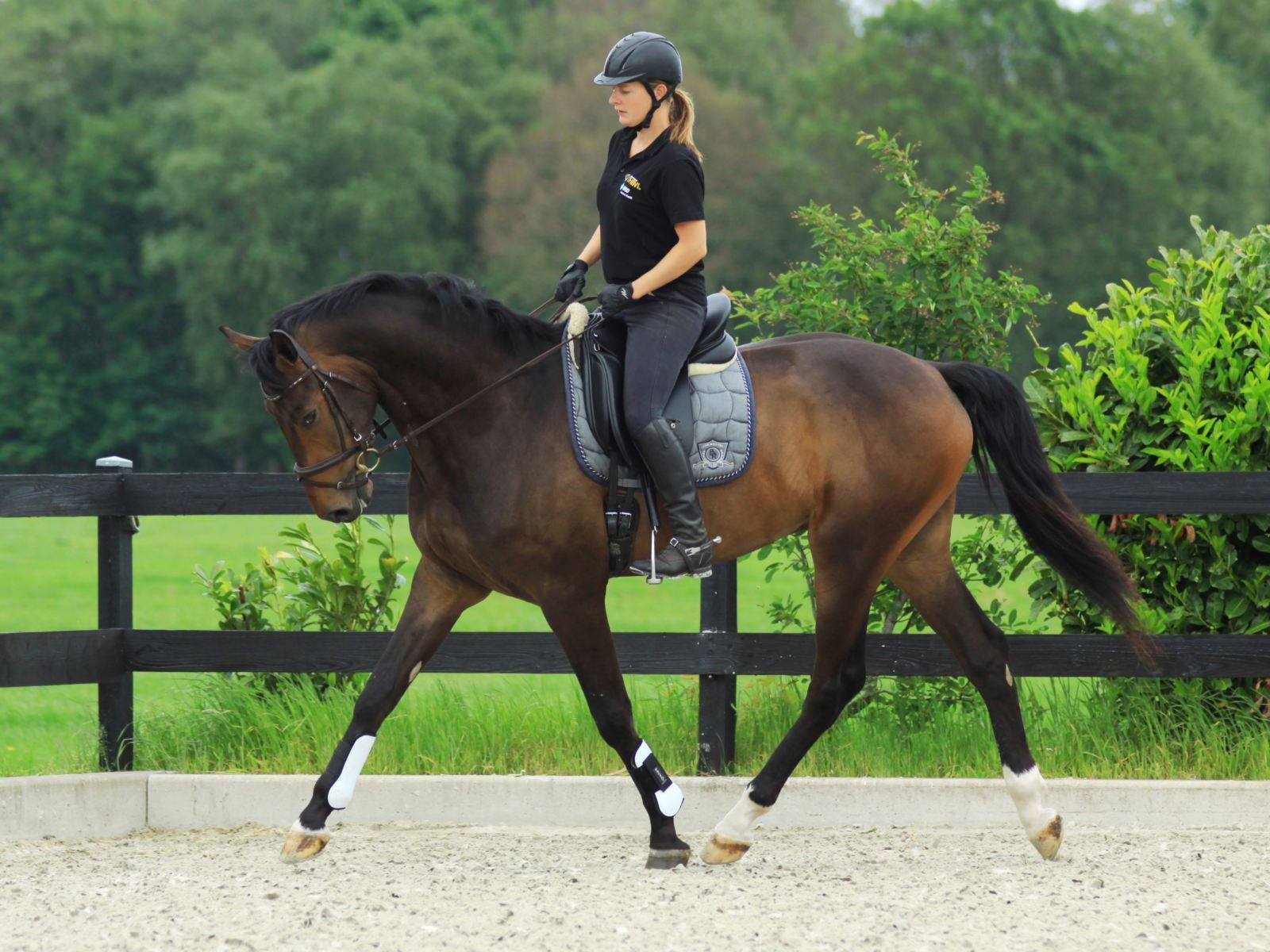 Dressage Horse For Sale Russia