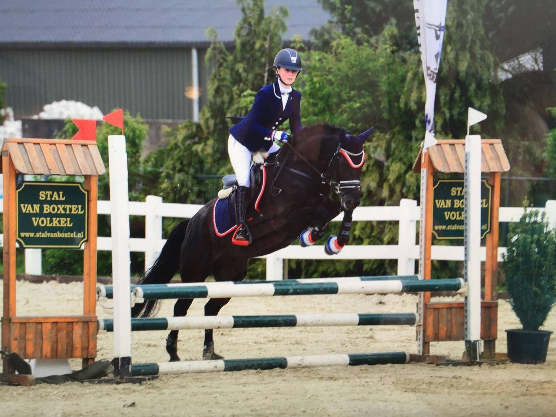 Hunter pony for sale USA