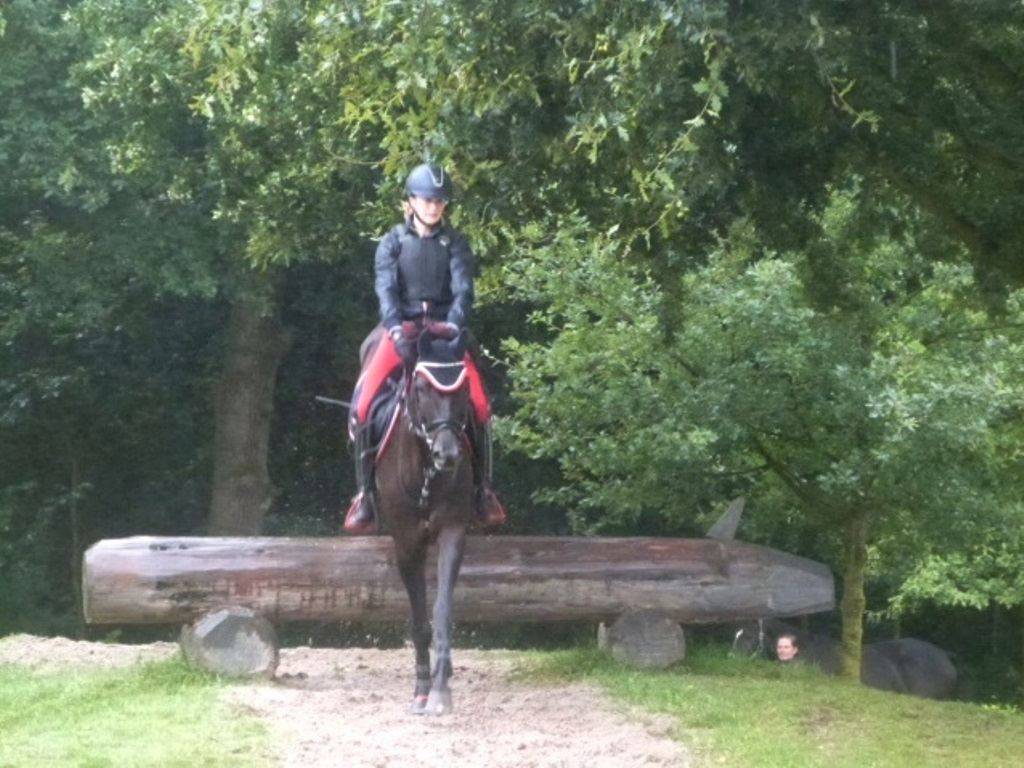 Eventing Pony for Sale USA