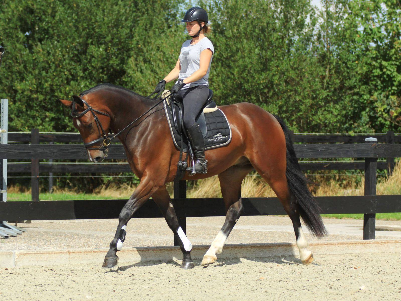 Dressage Horses for Sale New York