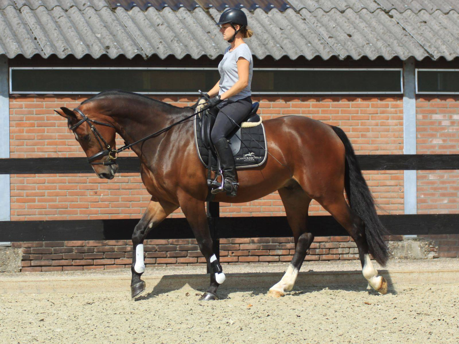 Dressage Horse for Sale New York