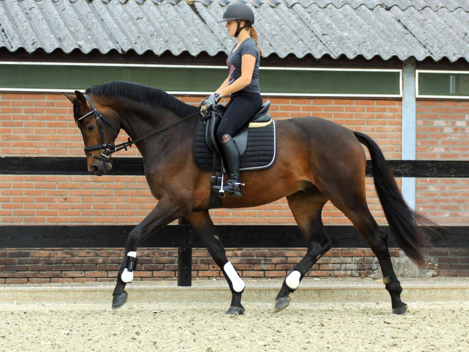 Lamour Dutch Dressage Warmblood for Sale Glamourdale x Jazz