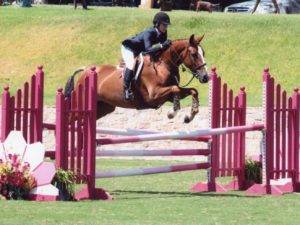 Equitation Horses for Sale