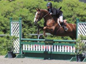 Equitation Horses for Sale California