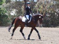 Warmblood Dressage Horses for Sale California Emily Lasher