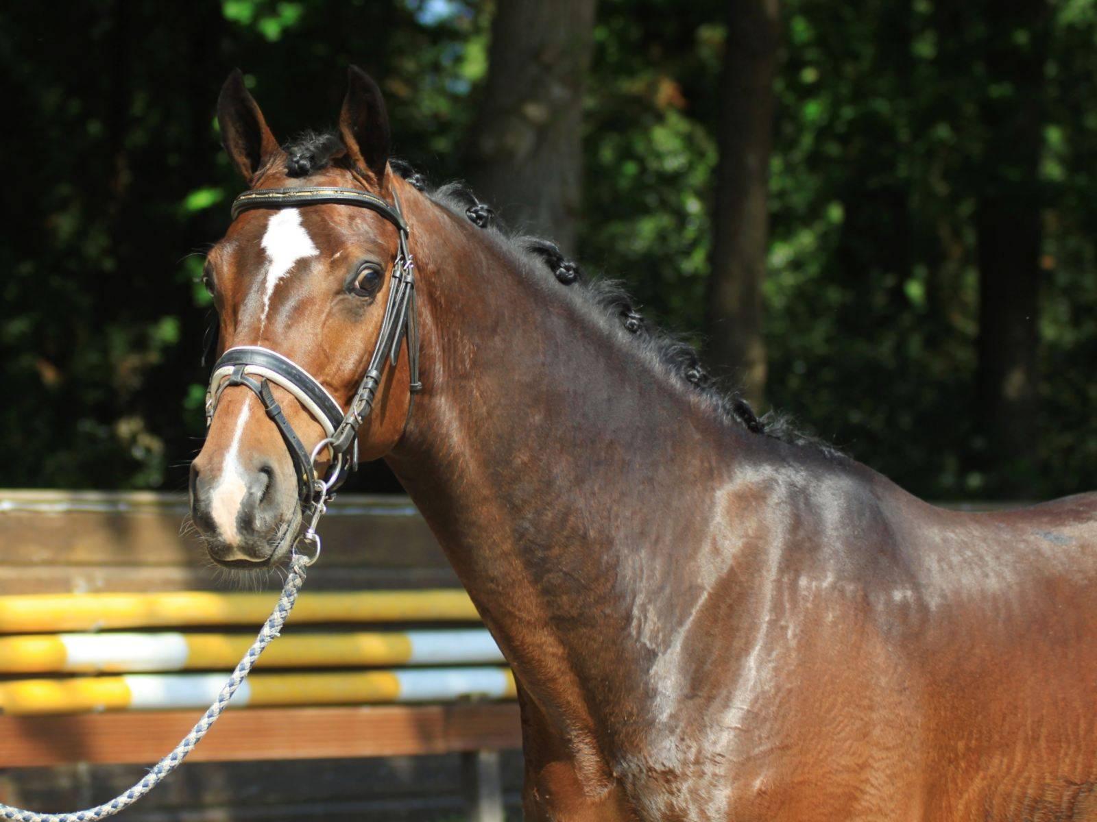 Dressage Horses for Sale Arizona California