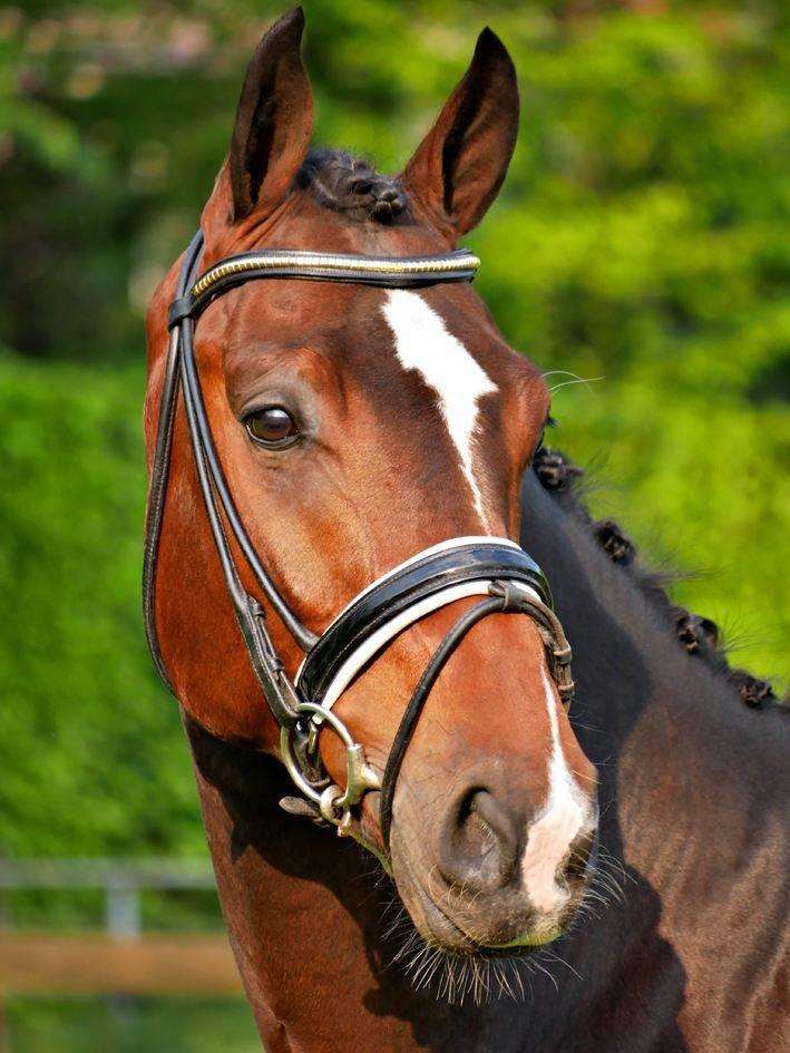 Dressage Horses for Sale Arizona