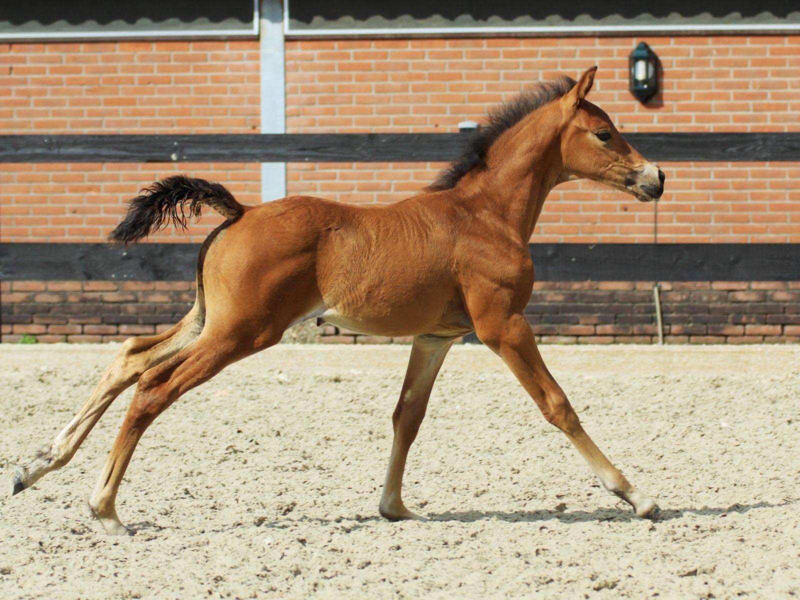 Young Horses Foals New York