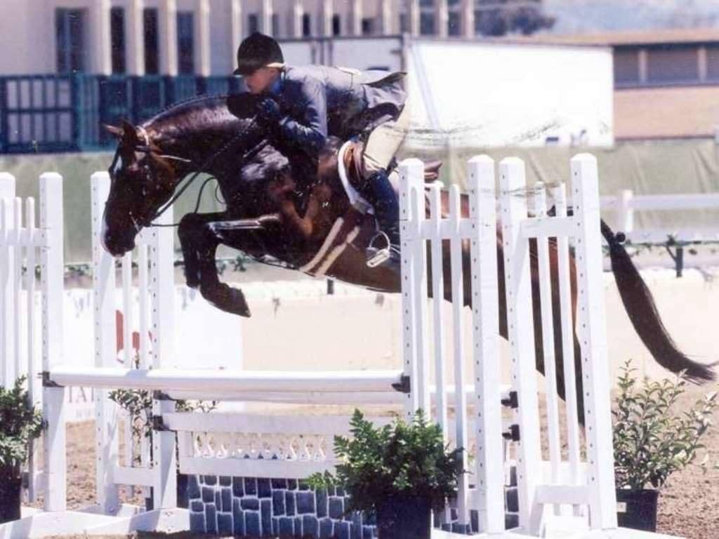 Hunter Jumper Horses for Sale Arizona