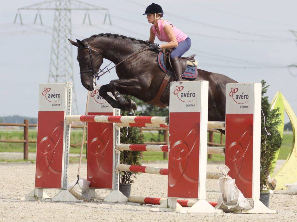 Show Jumping Horses South Africa