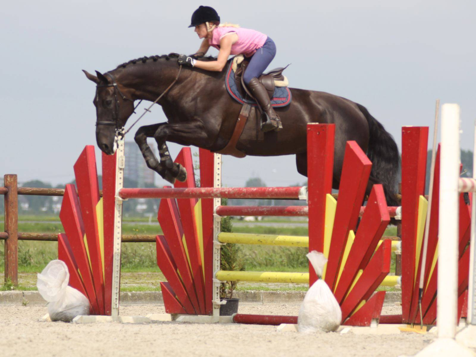 Show Jumping Horse South Africa