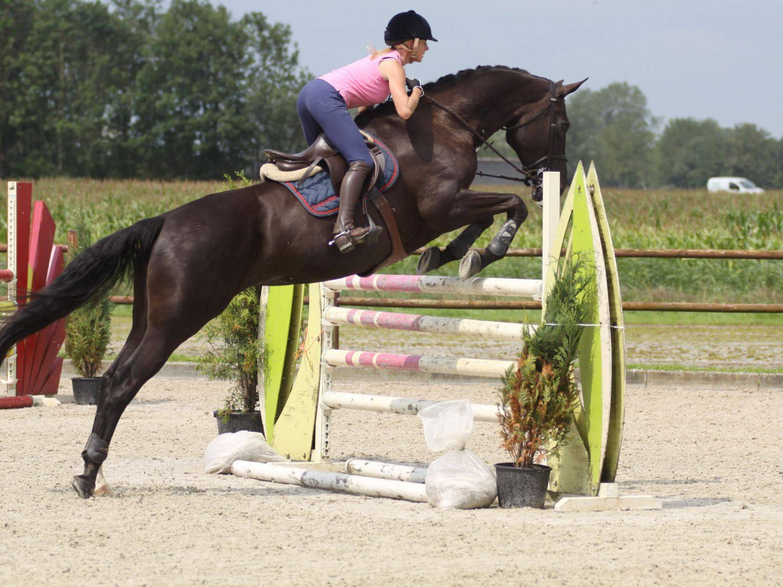 Show Jumping Horse for Sale South Africa
