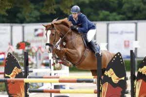 Dutch Jumping Horses For Sale Holland