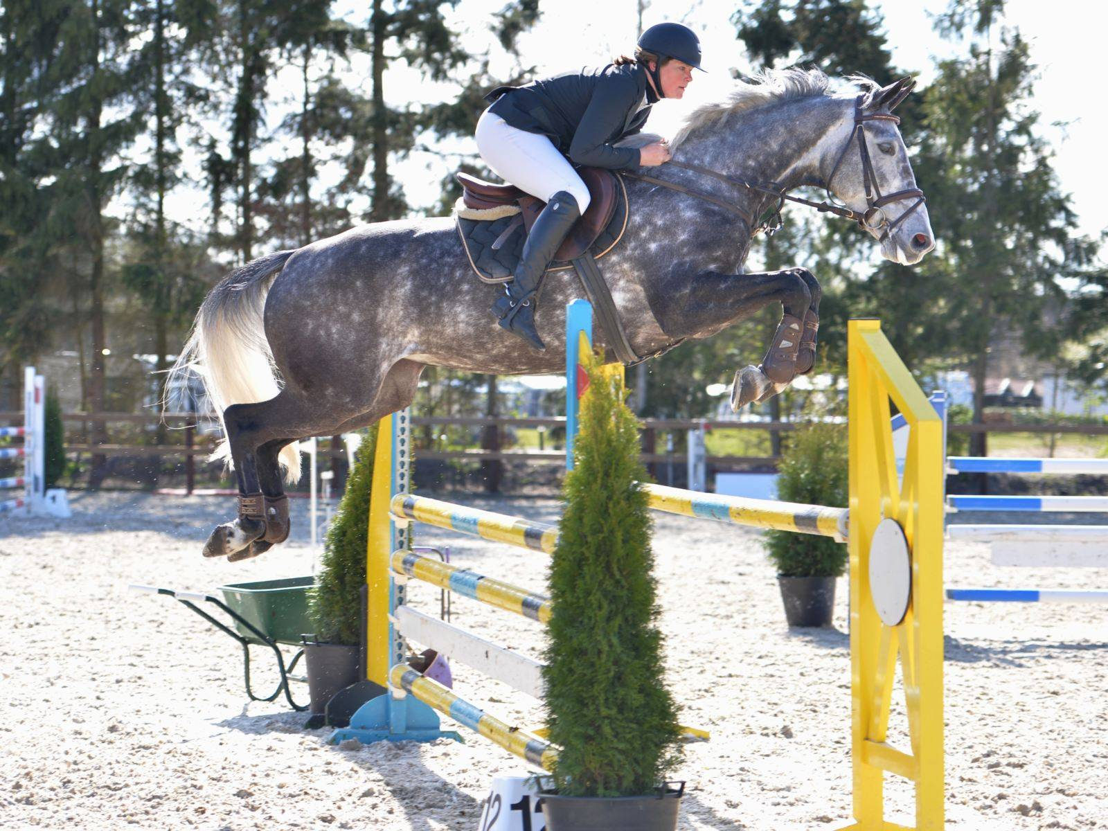 Jumping Mare for Sale in Holland