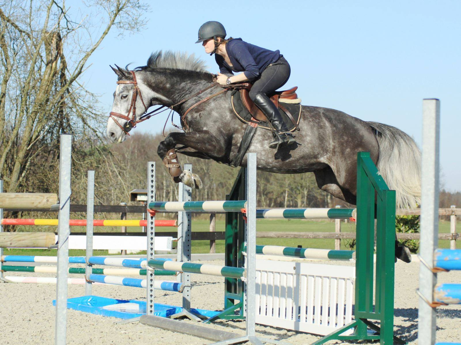Jumping Gelding for Sale in Holland