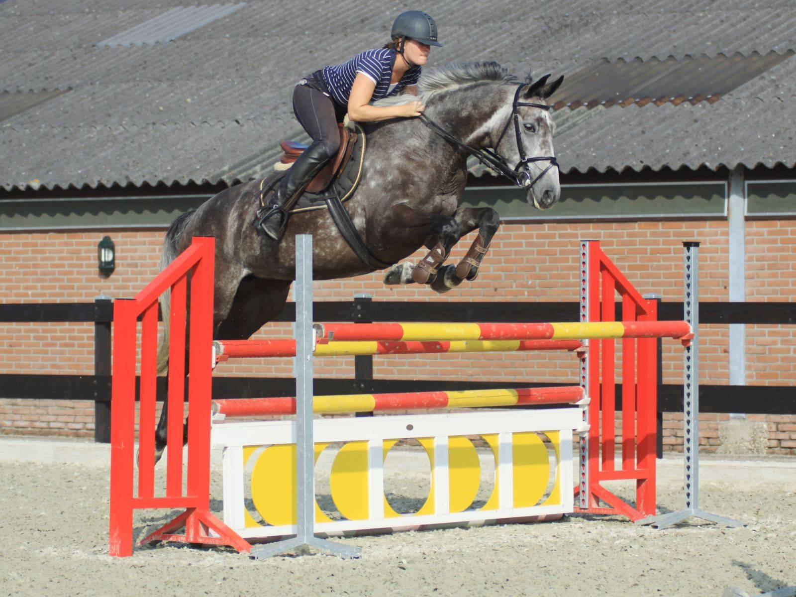 Jumping Horses for Sale in Holland