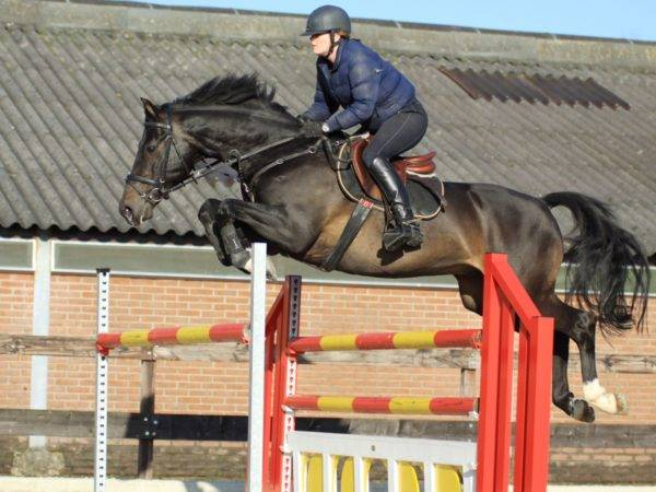 Show Jumping Horse for Sale Brazil