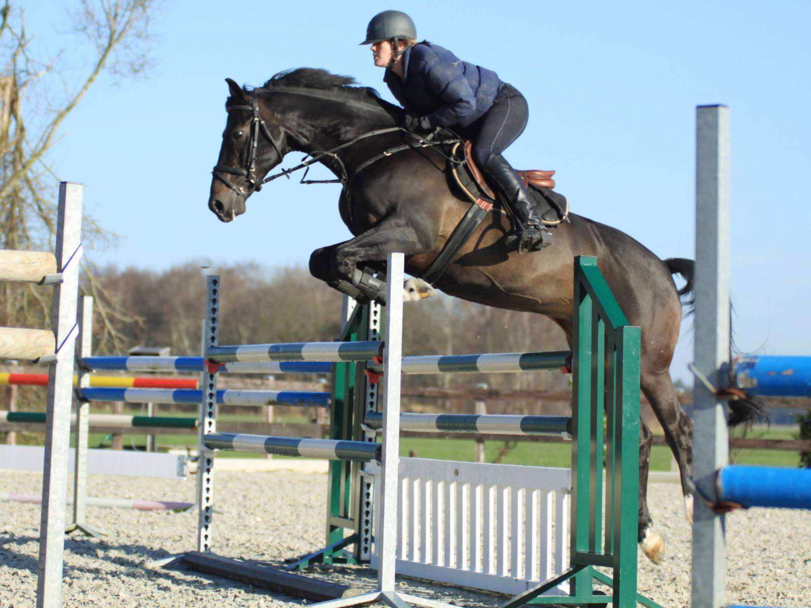 Show Jumping Horses for Sale Brazil