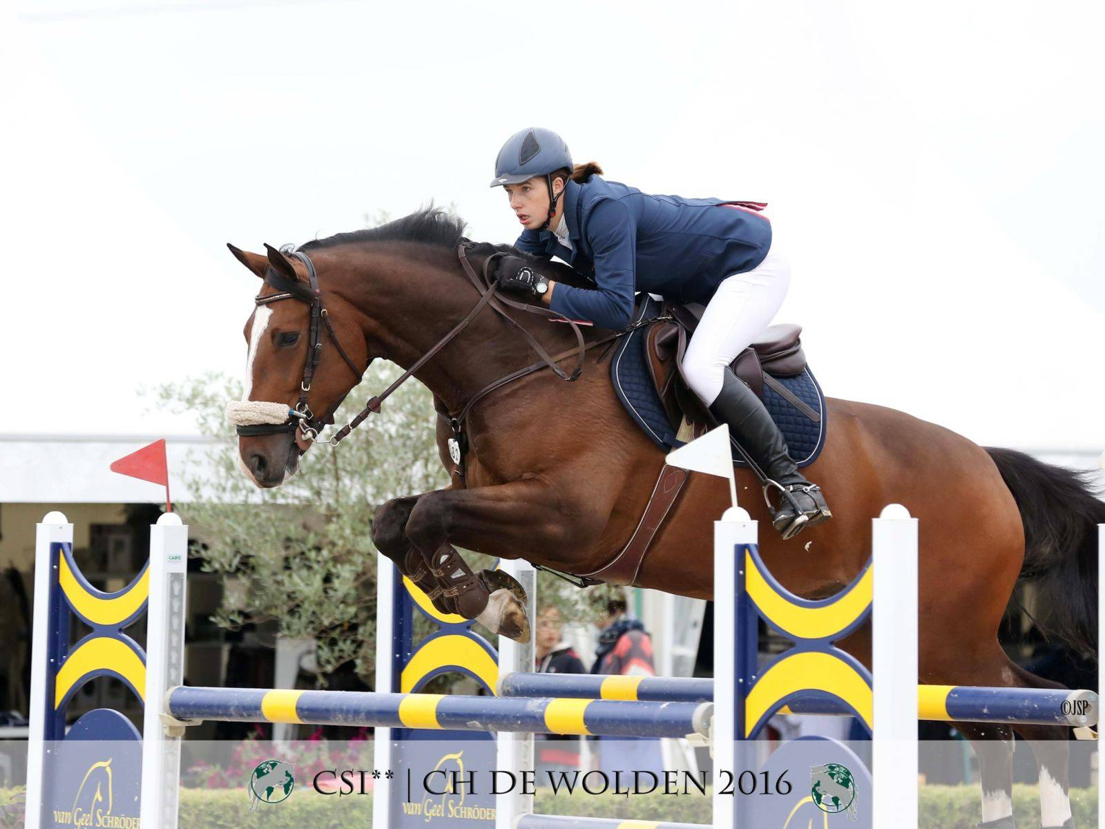 Jumping Horse for Sale Equestrian Japan