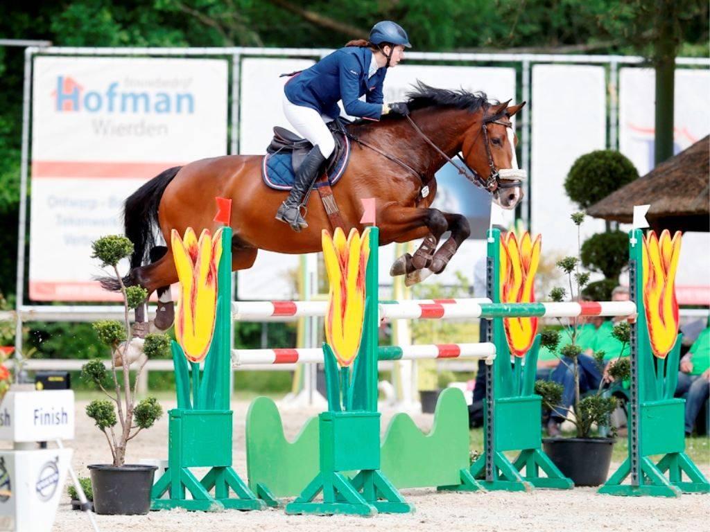 Show Jumping Horses Equestrian Japan