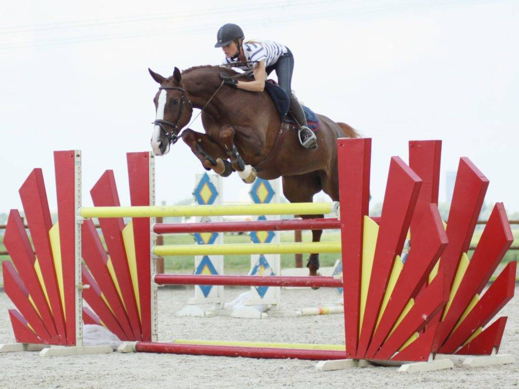 Warmblood Jumping Horses for Sale Kuwait