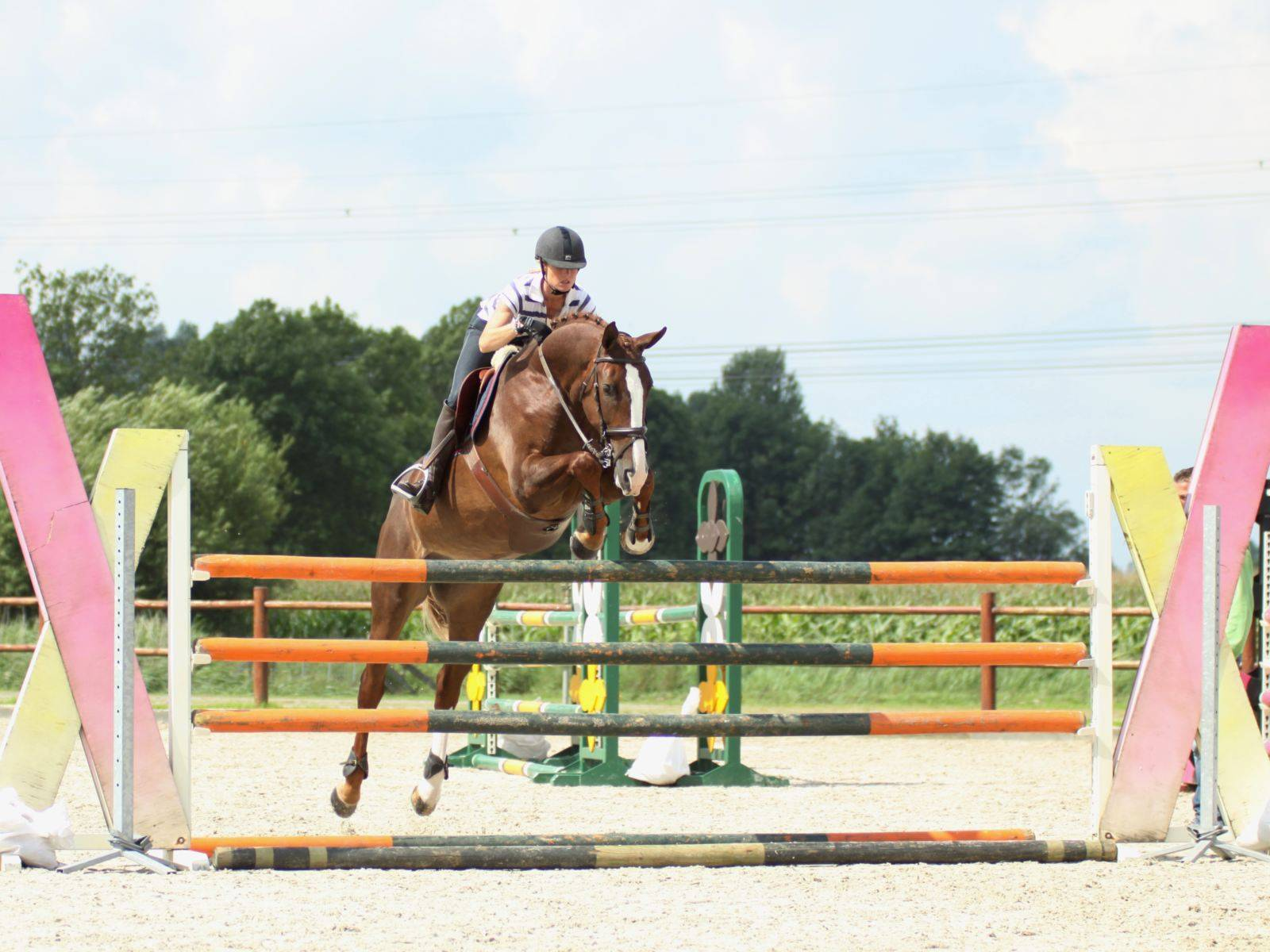Show Jumping Horse for Sale Kuwait