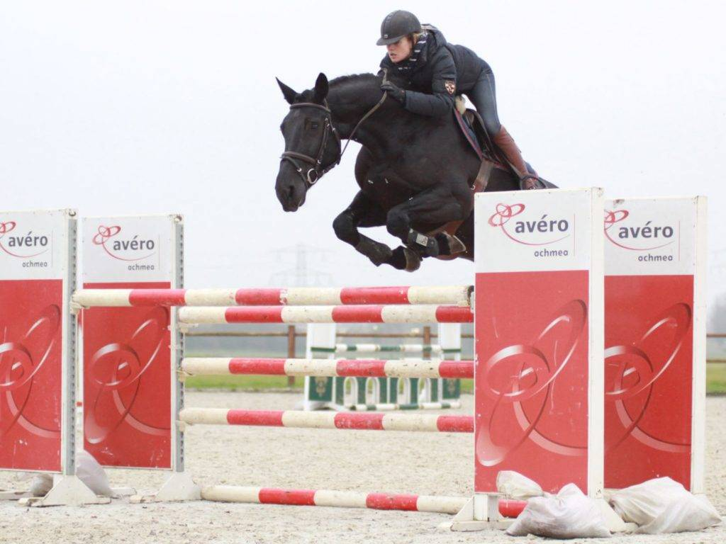 Show Jumping Mare for Sale