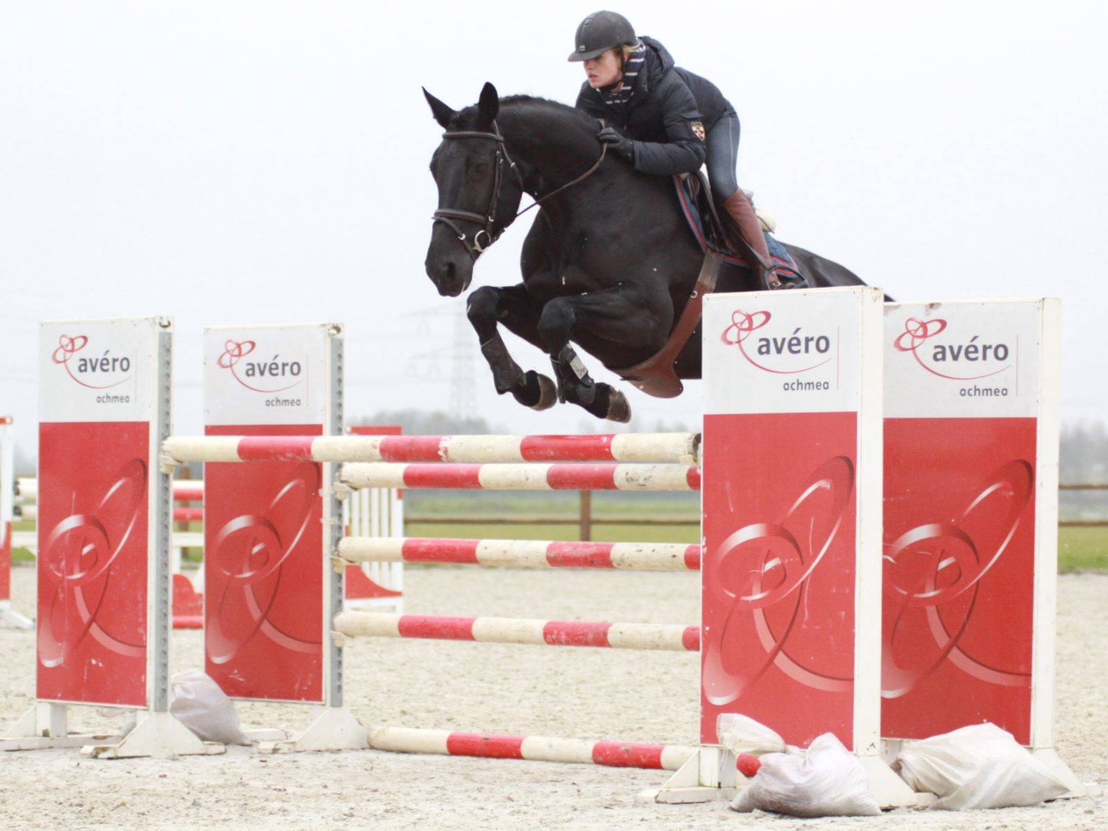 Dutch Show Jumping Mare for Sale USA