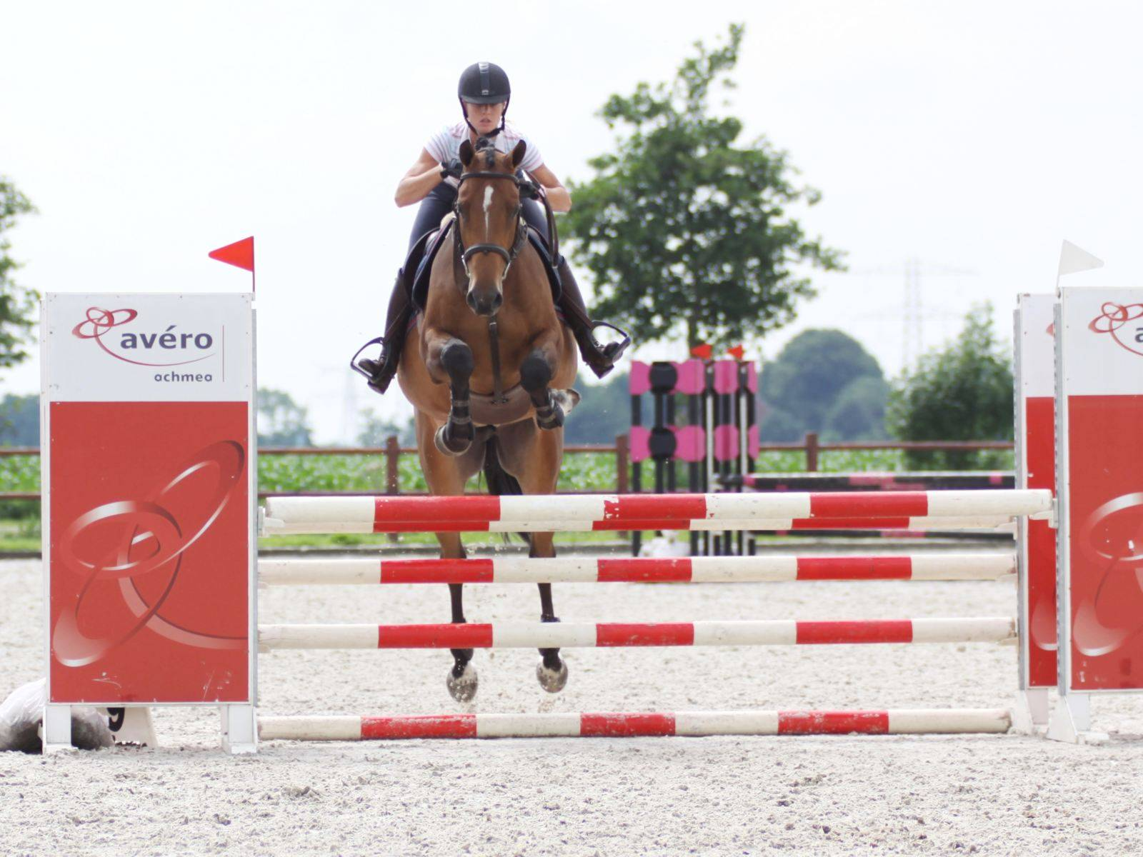 Show Jumping Horses for Sale South Africa