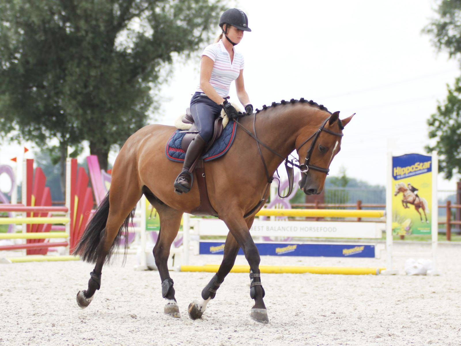 Jumping Mare for Sale Western Cape South Africa