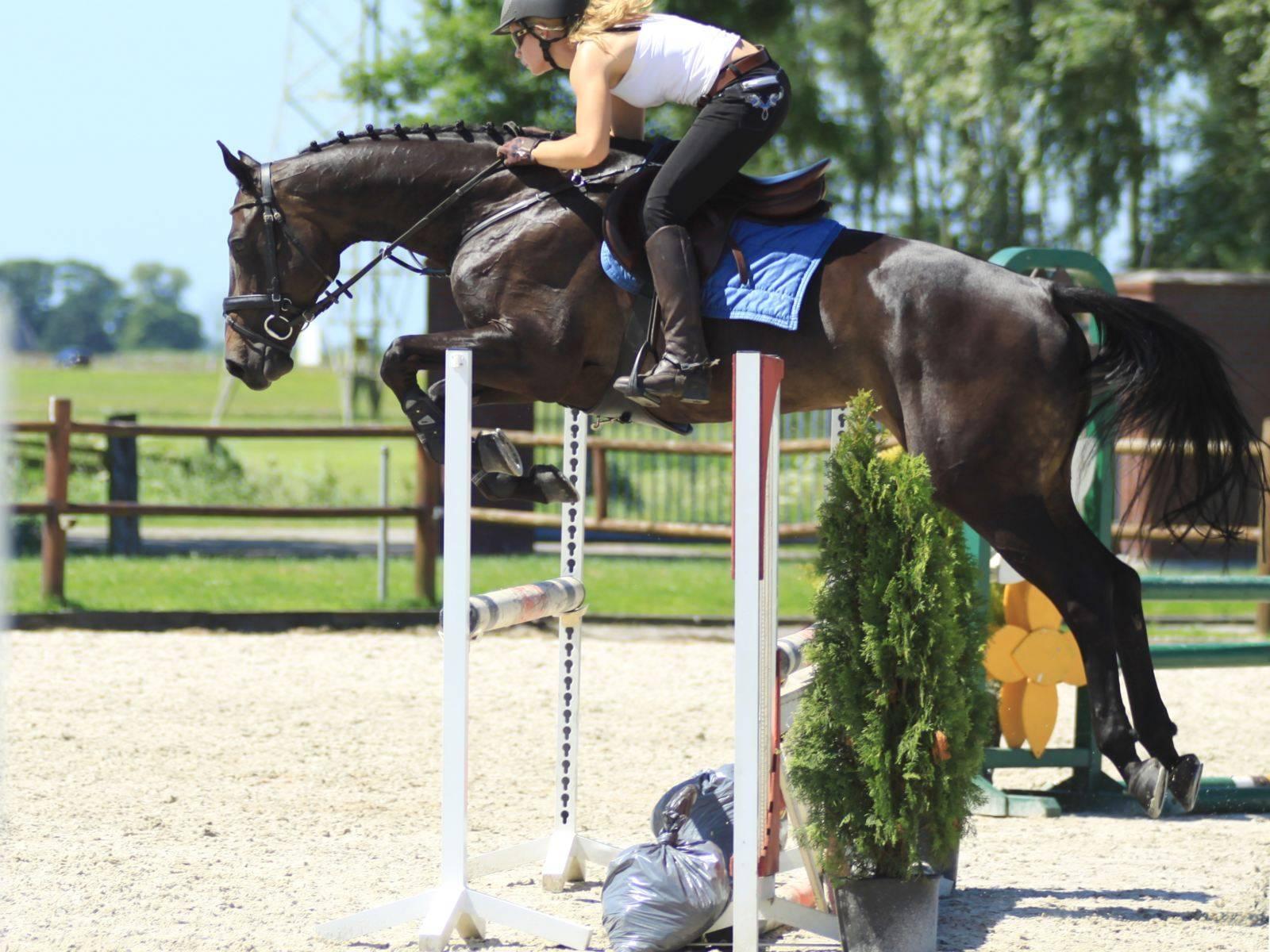 Jumping Horses Sale Jeddah Riyadh