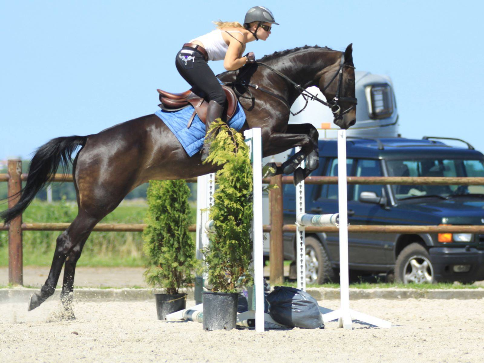 Jumping Horse for Sale Jeddah Riyadh