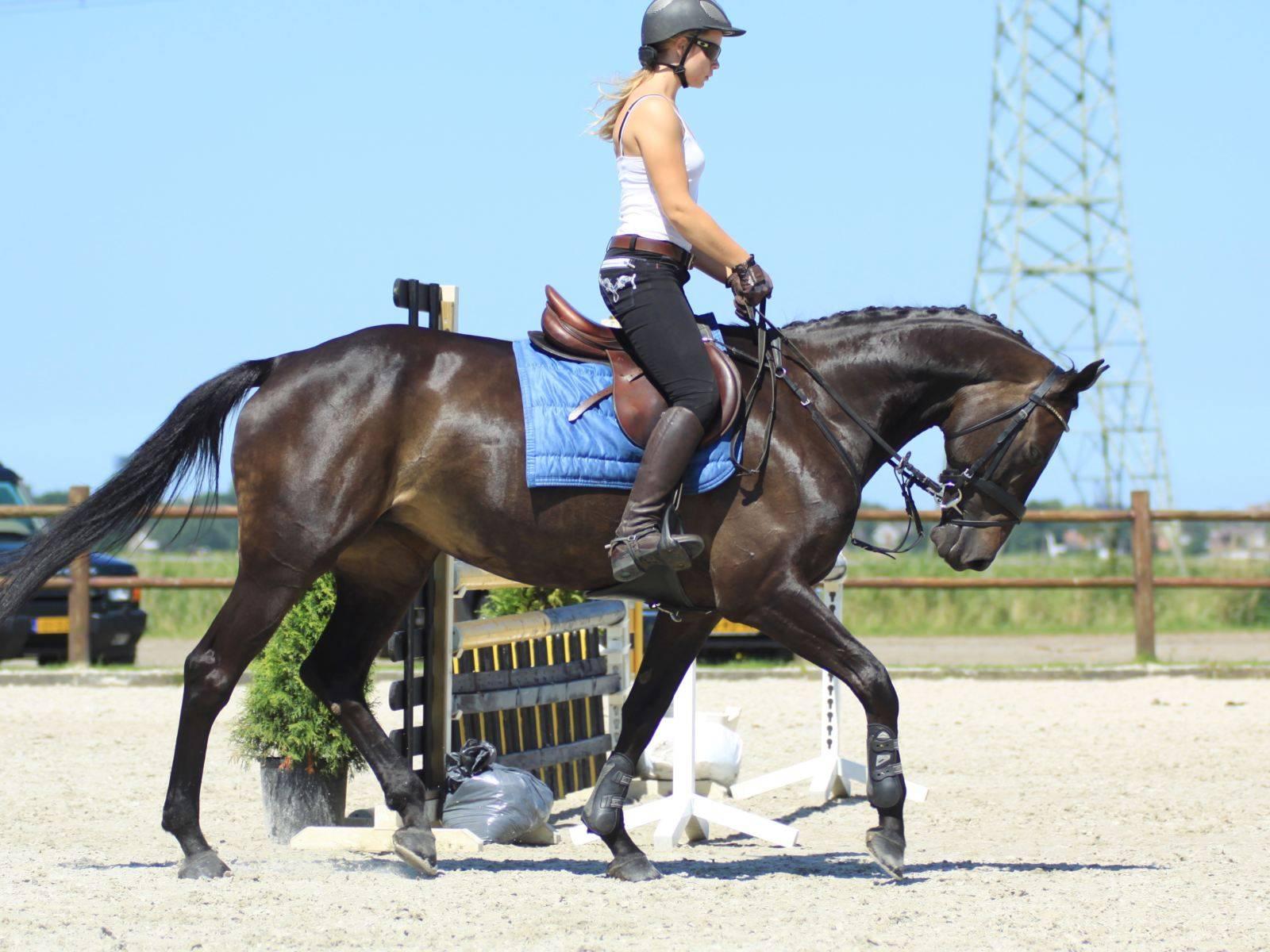Horses for Sale Jeddah Riyadh