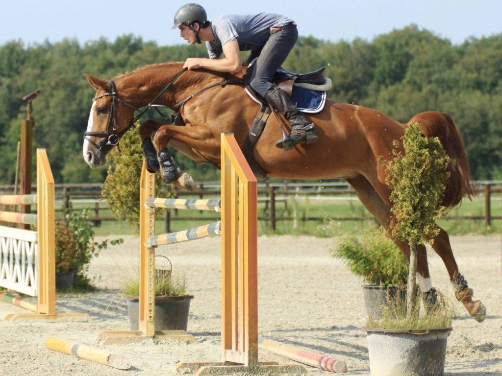 Hunter Horses for Sale in Holland