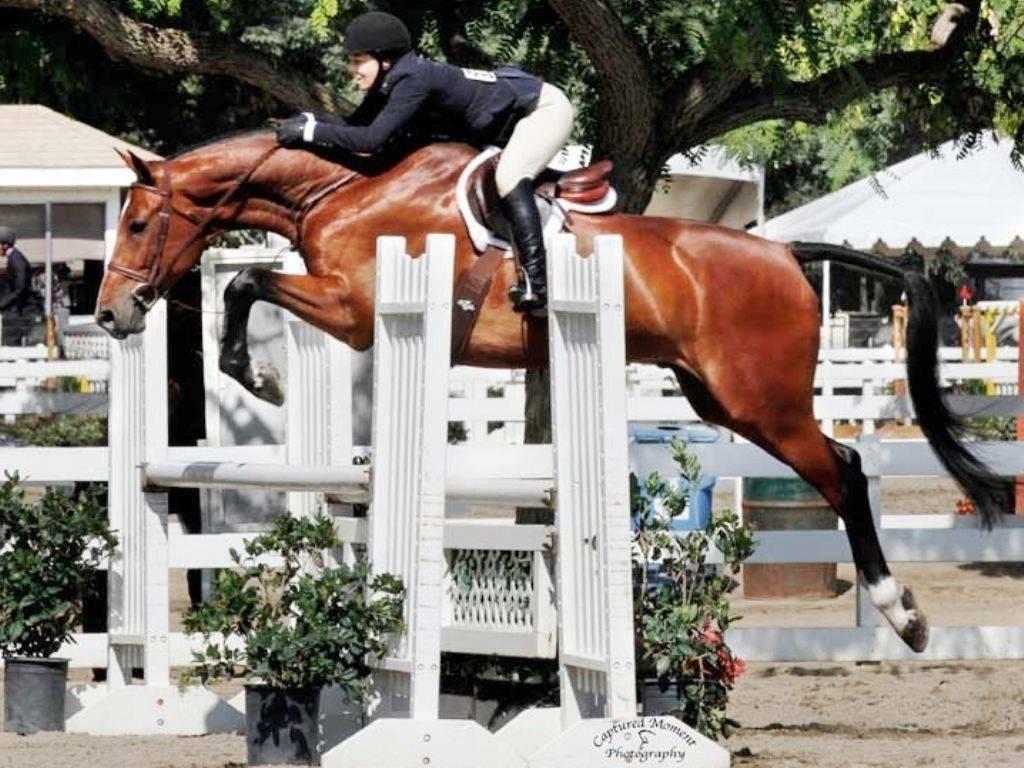 Hunter Jumper Horses for Sale California