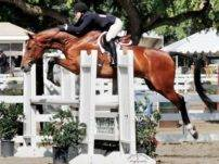 Hunter Jumper Horse for Sale California USA