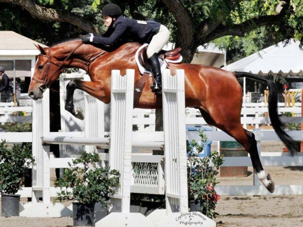 Hunter Jumper Horses for Sale California