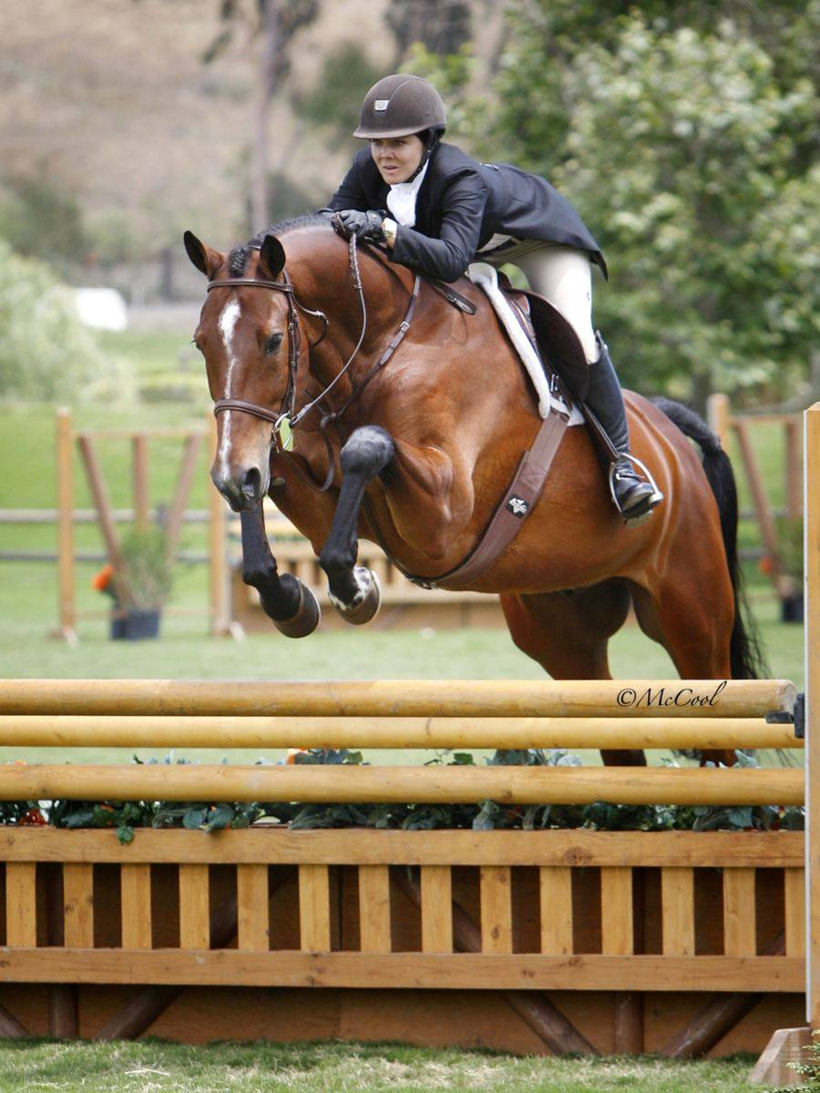 Hunter Jumper Horse for Sale California