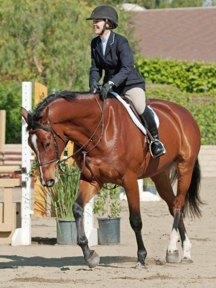 Hunter Jumper Horse for Sale California USA